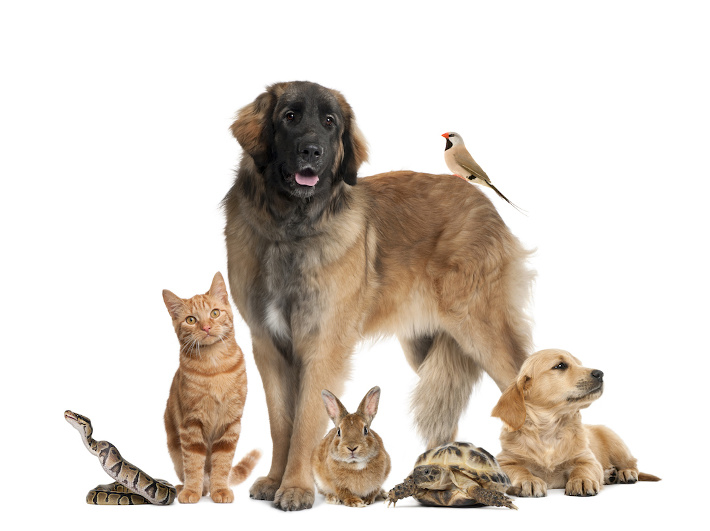 group-of-pets